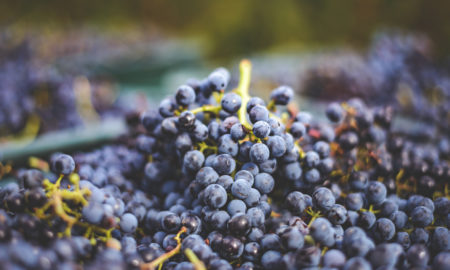 Semi d'uva mesotelioma